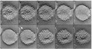 3D томография электронным микроскопом