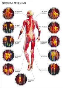 Миалгия представляет собой тянущие, иногда мучительные или спастические боли