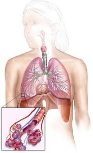 органов дыхания