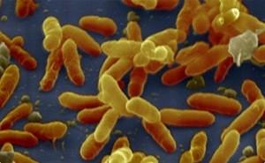 Возбудитель коклюша: характеристика, анализи на антитела