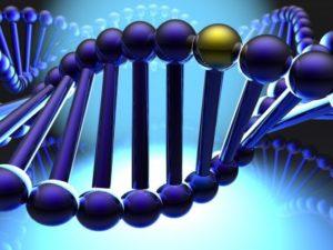 Генетическая предрасположенность - основной фактор