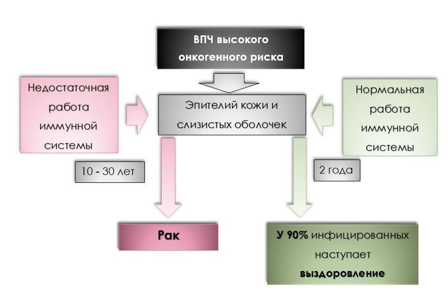Схема действия ВПЧ